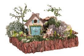5 tips for amazing fairy garden joykick