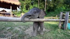 Chú voi con ở bản đôn - Part2 Nhạc thiếu nhi vui nhộn cho bé ...