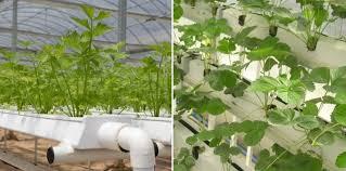 hydroponic greenhouse farming a full