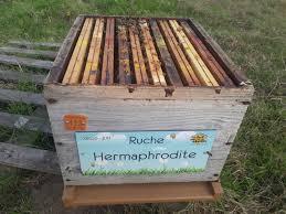 La ruche parrainée
