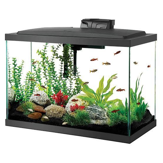 Tips to Set Up Your Saltwater Aquarium