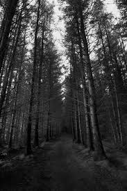 dark forest monochrome trees autumn