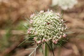 News & Writing – Old Ways Herbal: Juliette Abigail Carr, RH (AHG)