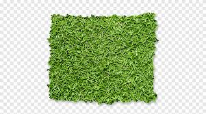 Green Leafed Grass Fence Garden Green Wall Lawn Hedge Fence Grass Ornamental Grass Png Pngegg