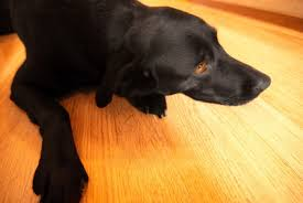 clean dog off of hardwood floors