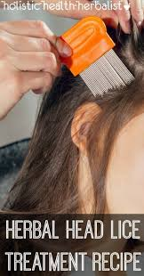 herbal head lice treatment recipe