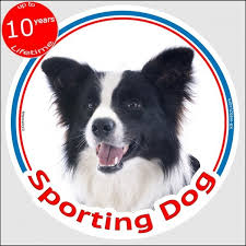 Border Collie Circle Car Sticker Sporting Dog 15 Cm Indoor Outdoor