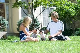 Electric Pet Fences By Hidden Boundaries And Pet Stop