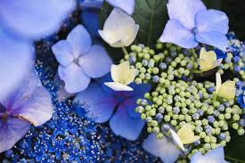 صور ورد طبيعي أجمل صور الورود الطبيعية بجودة عالية روزبيديا