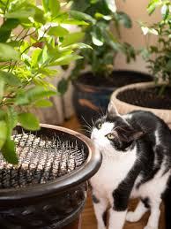 Scat Mat Cat Repellent For Gardens 78 X11 Roll Free Shipping