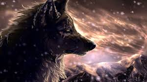 cool wallpapers of wolf wolf
