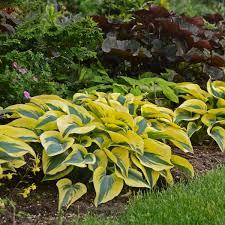 perennials for clay soil
