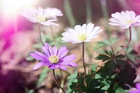 أجمل صور ورود خلفيات صور ورود ملونةجذابة صور زهور مميزة خلفيات