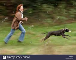 Hilary Parker exercising with her lurcher dog Jake at Worle Weston Stock  Photo: 2741969 - Alamy
