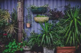 Small Garden Design Ideas Greener Ideal