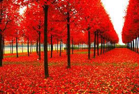 seasons wallpapers 30