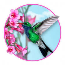 Hummingbird Tumbler Decal Tumbler Decals Advanced Graphics Inc