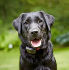 Profence Hidden Dog Fences Dogwatch By K9 Keeper Fencing
