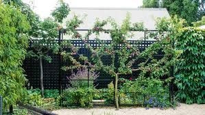 a small christchurch garden that s a