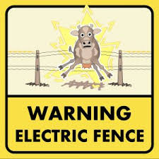 Teaching Livestock To Respect Electric Fences On Pasture