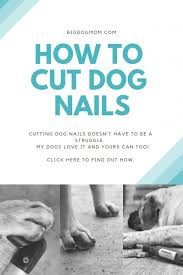 how to cut large dog nails and have