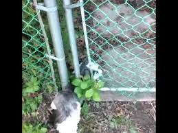 Dog Crawls Under Fence Youtube
