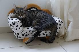 homemade cat treats a fun way to keep
