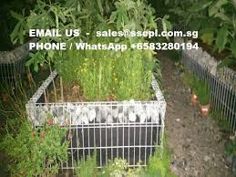 Privet Property Fence Singapore Specialized Engineering Pte Ltd