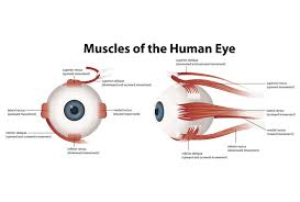 eye muscle strain vision specialists