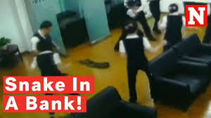 snake falls from the ceiling in chinese