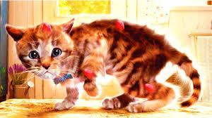 القطة الصغيرة مغامرة رعاية الحيوانات رسوم متحركة جميلة مع القطط