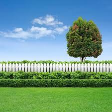 Boxwood Shrubs Schulhoff Tree Lawn Care Inc
