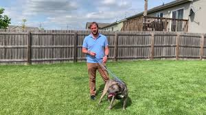 Stopping Thor S Fence Fighting With Other Dogs Youtube