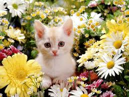 cute cat wallpapers kitten wallpapers