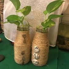 money plant in beautiful bottles