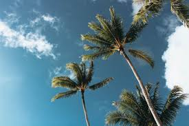 california palm trees wallpaper for