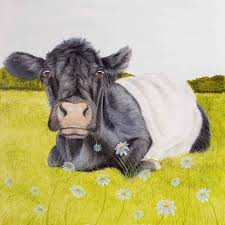 florence the belted galloway