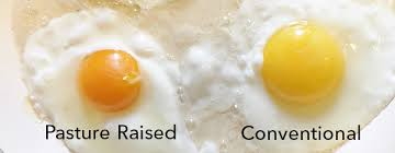 ing egg carton labels what they