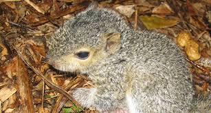 trap the squirrel
