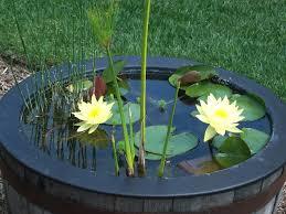 water garden in three easy steps