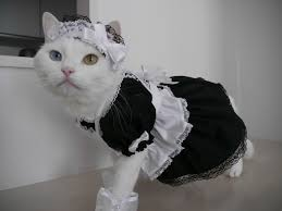 Image result for cat maid