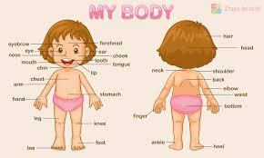 las partes del cuerpo en inglés para