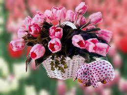 زهور جميلة ماسبق شفت اجمل من هذه الورود والازهار فعلا خرافية
