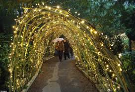 fairy lights in willow tunnel fairy