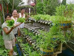 urban gardening container gardening