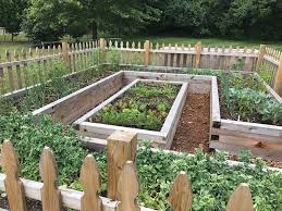 raised vegetable garden our land