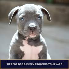 Top Tips For Puppy And Dog Proofing Your Yard Handyman Can