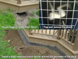 How To Get Rid Of Skunks In Yard Or Under House Steps And Tips