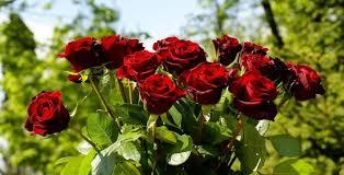 Karanfil ve güller anneler için hazırlanıyor | Gündem haberleri