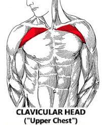 the maximum pump upper chest workout